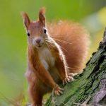 Bénin: Et dire que le nom «Ecureuils» ne faisait pas peur!